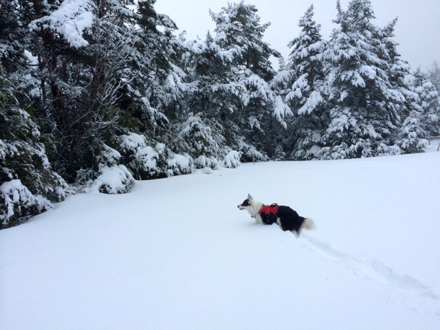Once you get into deep powder snow, traction devices pretty much become redundant.
