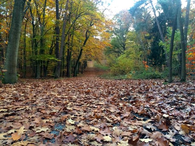 The forest floor was a carpet of leaves